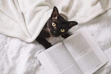 importante-lectura-critica